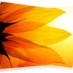 دلایل استفاده از رنگ نارنجی در طراحی سایت